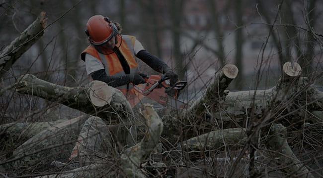 Irmo Tree Service